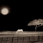 White Horse Moon by Ron C. Moss