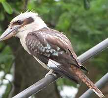 Riviera Visual - Australian Backyard Icons - Hills Hoist - Kookaburra by RIVIERAVISUAL