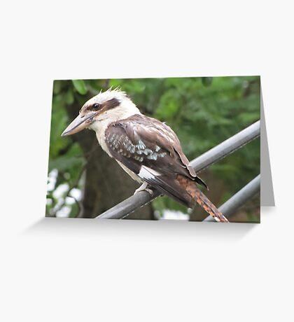 Riviera Visual - Australian Backyard Icons - Hills Hoist - Kookaburra Greeting Card