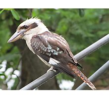 Riviera Visual - Australian Backyard Icons - Hills Hoist - Kookaburra Photographic Print