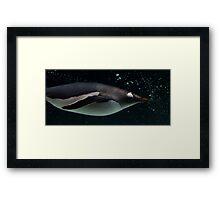 Swimming Penguin Framed Print