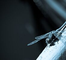 a Dragonfly by manipad