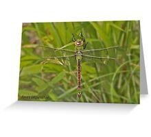 female Emperor Dragonfly Greeting Card