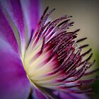 Purple Clematis by Elaine Short