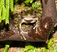 Head On - Common Mist Frog by Henry  Cook