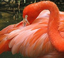 Florida Favorite, Dreher Park Zoo by nancyb926