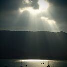 Rays on the Bays by Paul Davis