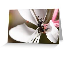 Australian Native Bee Greeting Card