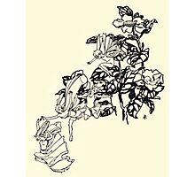 The Zankiwank & the Bletherwitch by Shafto Justin Adair Fitz Gerald art Arthur Rackham 1896 0063 Wee Fey Photographic Print