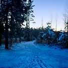 The winter road in the evening by Antanas