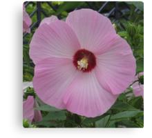 Lt. Pink Hibiscus Canvas Print