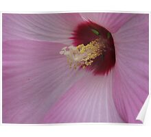 Pink Hibiscus 2 Poster