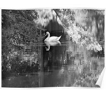 Mirrored Wildlife Poster