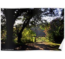 Sunlight Woods Poster