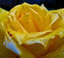 """Una rosa que florece""  by Violeta Pérez Anzorena"