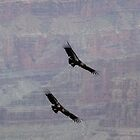 Condors over the Grand Canyon by Amanda Yetman