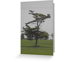 Stand Alone Greeting Card