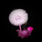 Pink by mark4321