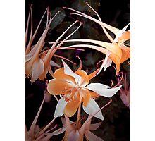 Orange Movement Photographic Print