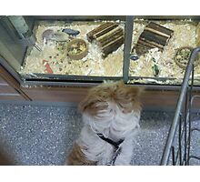 Skye at the Pet Shop, making friends? Photographic Print