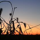 Cornfield Sunset ~ Thornville Ohio. by mousepotato66