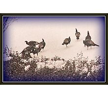 Snow Turkeys Photographic Print