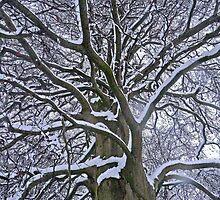 Abre en hiver  by Jessica Lister