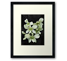 White Orchids on Black Framed Print
