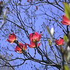 A Taste of Spring ~ Dogwood in Blossom by mousepotato66