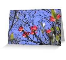 A Taste of Spring ~ Dogwood in Blossom Greeting Card