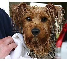 Bathtime for Gizmo Photographic Print