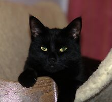 Yup, I'm a Black cat so what of it HMMMM ?? by jillijude1