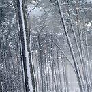 WinterWood by Bluesrose