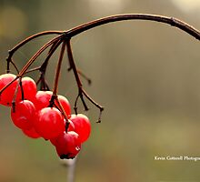 Winter Berries by Kevin Cotterell