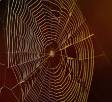 'Swinging Web' Sticker