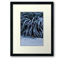 The Winter Robin Framed Print