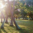 Fijian Sunrise by JenniferElysse