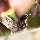 Baby Bird by JenniferElysse