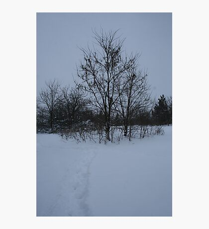 Dull Winter's Day Photographic Print