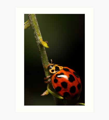 Lady beetle with a climb ahead Art Print