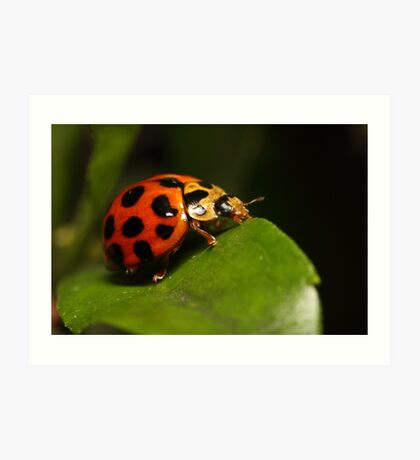 Lady beetle on a leaf Art Print