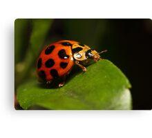 Lady beetle on a leaf Canvas Print
