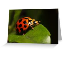 Lady beetle on a leaf Greeting Card