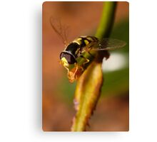 Hoverfly resting Canvas Print