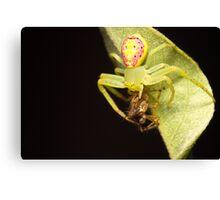 Flower Spider with dinner Canvas Print