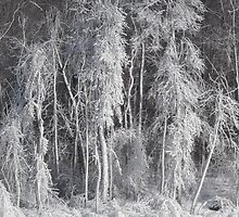 Frozen Forest by Les Wazny
