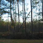 Fallen Tree by MrSoundman
