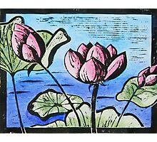 Lotus pond Photographic Print