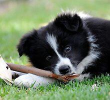 Tasty Stick by Robyn Evans