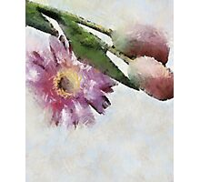 Blooming friends Photographic Print